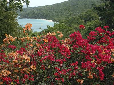 Photograph - Caribbean Delight 2 by Karen Zuk Rosenblatt