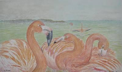 Bird Painting - Caribbean Flamingos by Hannah Boynton