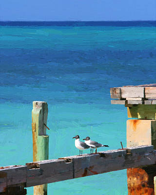 Digital Art - Caribbean Gulls by Heidi Hermes