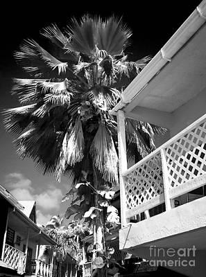 Photograph - Caribbean Living by John Rizzuto