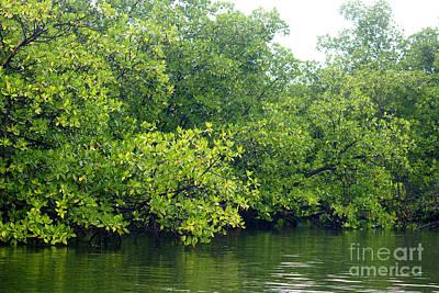 Photograph - Caribbean Mangroves by Rudi Prott