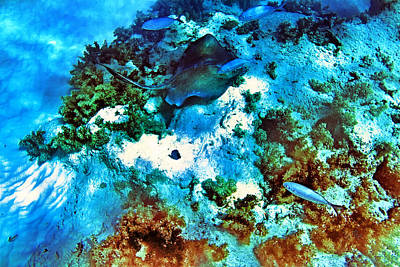 Photograph - Caribbean Sea Bottom With Sting Ray And Tropical Fish by Eti Reid