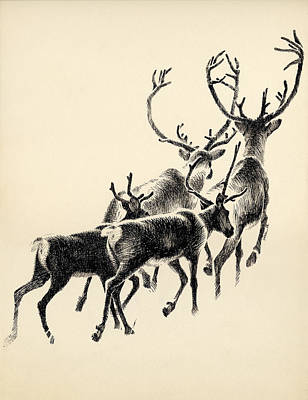 Drawing - Caribou by Mamoun Sakkal