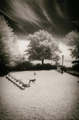 Photograph - Carl Schurz Dogwalk by Dave Beckerman
