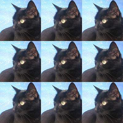 Of Black Cats Photograph - Black Cat by Cathy Jacobs