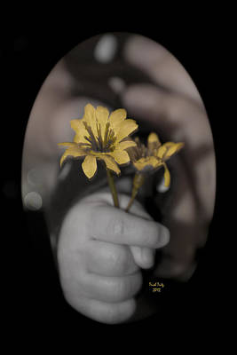 Black Photograph - Carlee's Daisy by Trish Tritz