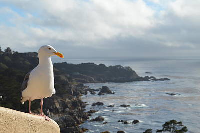 Tickled Pink Photograph - Carlos The Pacific Gull by Anthony Smith