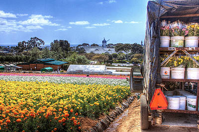 Photograph - Carlsbad Flower Fields by Ann Patterson