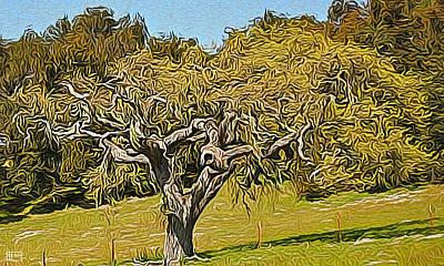 Photograph - Carmel Valley Live Oak by Jim Pavelle