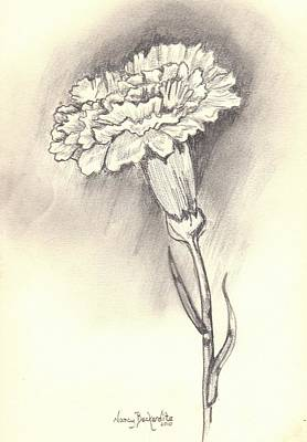 Carnation Drawing - Carnation by Nancy Beckerdite