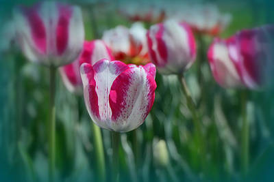 Photograph - Carnaval De Nice Tulip by Allen Beatty