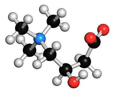 Carnitine Molecule Art Print