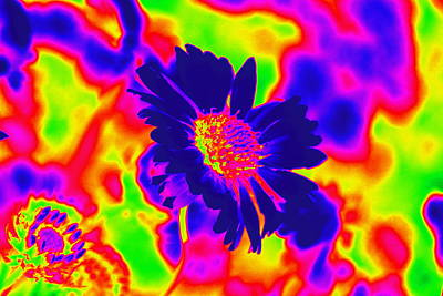 Digital Art - Carnival Flower by Anne Barkley