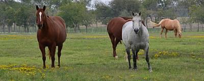Photograph - Carol Rose Ranch 3 by Ricardo J Ruiz de Porras