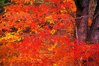 Carolina Autumn Art Print by Marion Johnson