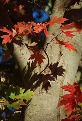 Photograph - Carolina Autumn by Suzanne Gaff