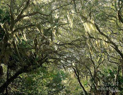 Photograph - Carolina In The Morning by Tami Quigley