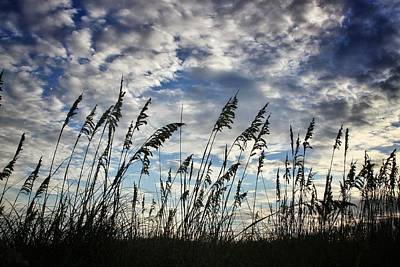 Photograph - Carolina Sea Oats by Dave Hall