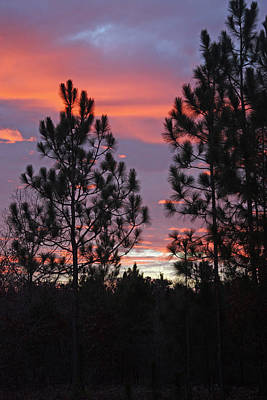 Carolina Sunset Art Print by Carolyn Stagger Cokley