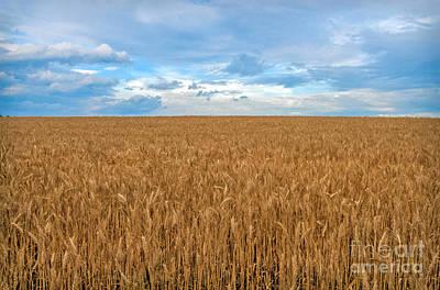 Carolina Wheat Field Art Print by Marion Johnson