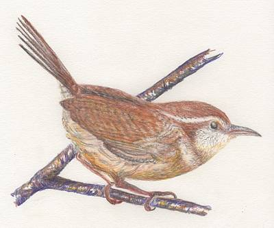 Carolina Wren Art Print by Bev Veals