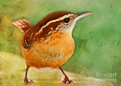 Carolina Wren Greeting Card Size Art Print by Debbie Portwood