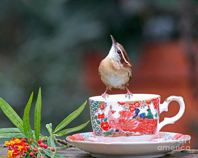Carolina Wren Is This Green Tea Art Print by Luana K Perez