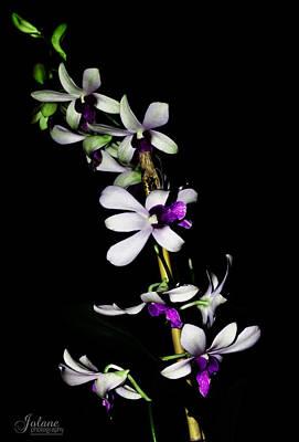 Carol's Orchid Art Print