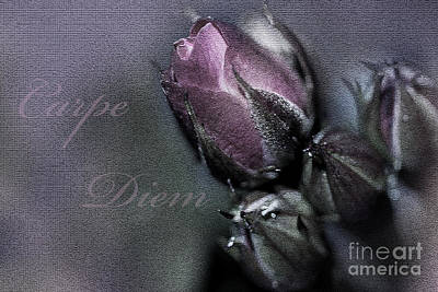 Grettings Digital Art - Carpe Diem by Ann-Charlotte Fjaerevik