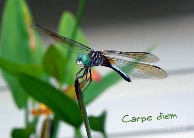 Photograph - Carpe Diem by Renee Trenholm