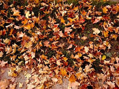 Photograph - Carpet Of Autumn Leaves by Miriam Danar