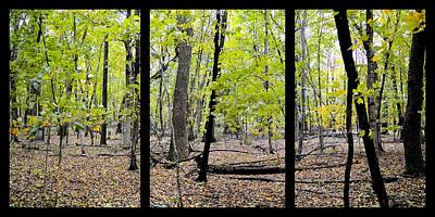 Photograph - Carpet Of Leaves Triptych by Bonfire Photography