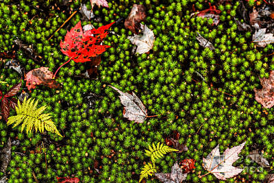 Carpet Of Moss Cranberry Wilderness Art Print