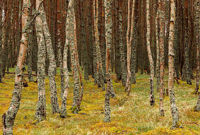 Photograph - Carpeted Forest by Brian Grzelewski