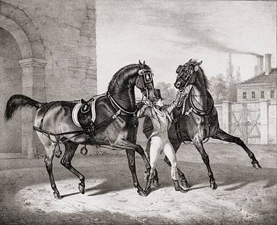 Horses Drawing - Carriage Horses For The King by French School