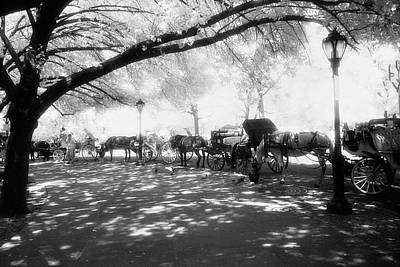 Photograph - Carriage Horses Nyc by Dave Beckerman
