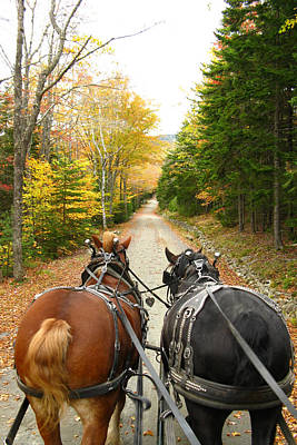 Photograph - Carriage Ride by Acadia Photography