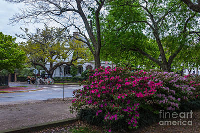 Photograph - Carriage Ride In The Park by Dale Powell