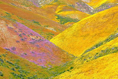 Carrizo Wildflowers Art Print