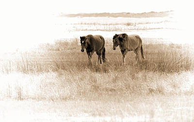 Photograph - Carrot Island Ponies by Sharon Seaward