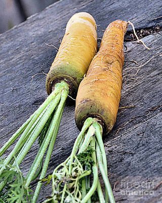 Photograph - Carrots by Janice Drew