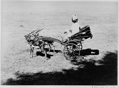 Carriage Road Photograph - Cart Drawn By Two Small Deer by British Library