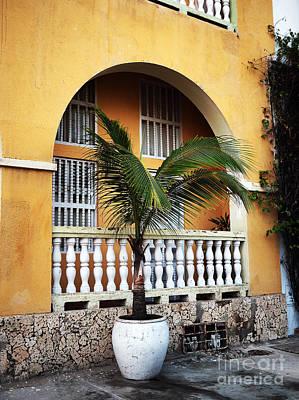 Photograph - Cartagena Palm by John Rizzuto