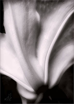 Photograph - Casa Blanca Lily In Black And White by Louise Kumpf