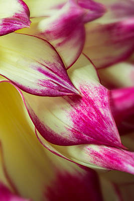 Floral Abstractions Photograph - Cascade by Mary Jo Allen