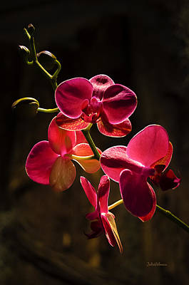 Photograph - Cascade Of Orchids by Julie Palencia