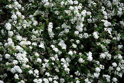 Photograph - Cascades Of White by Judy Wanamaker