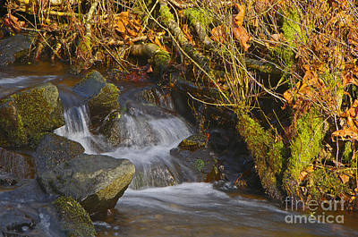 Photograph - Cascading Creek by Sharon Talson