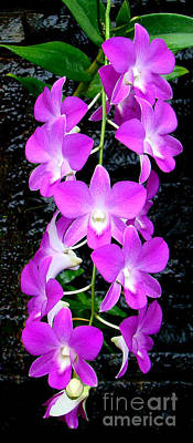 Cascading Orchids Art Print by Sue Melvin