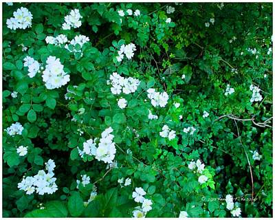 Photograph - Cascading White In Wildwood by Kendall Kessler